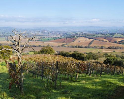 2 - Vineyard