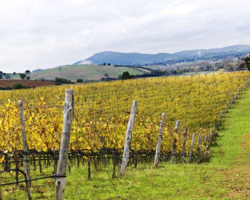 5-vineyard