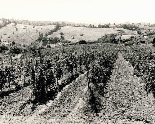 Foto Bonazza - bn vigne