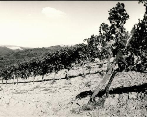 Foto Bonazza - bn vigne2