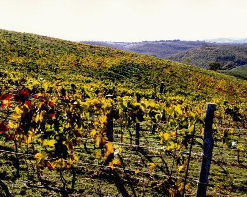 Foto Bonazza - vigne2